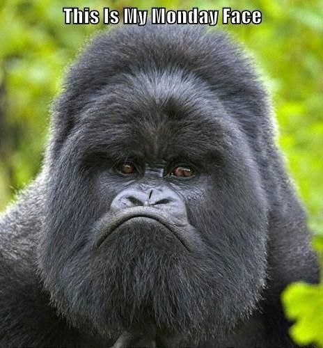After such a beautiful weekend it's tough to get back into work mode when all you want to do is sit on a patio! Have a great week and turn that gorilla frown upside down!