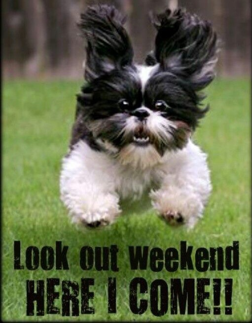 Are you making a mad dash out of work today? Haha this guy has the right idea, enjoy the long weekend!